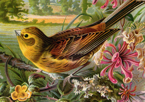 Bird-Album-Page-CU