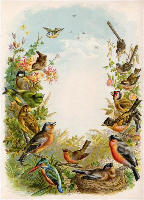 Cathe-Holden-Bird-Album-01