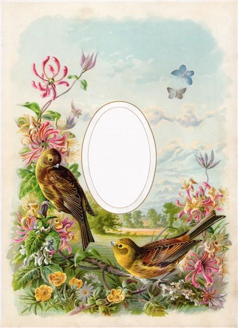 Cathe-Holden-Bird-Album-02