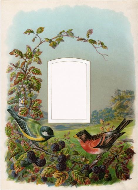 Cathe-Holden-Bird-Album-04